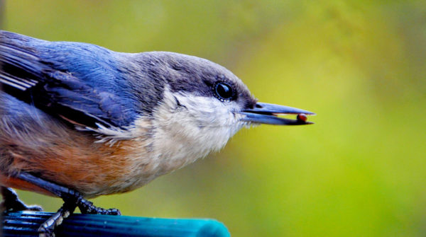 A bird with a seed in its mouth
