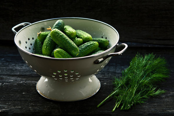 Cucumbers in a colander ready for canning