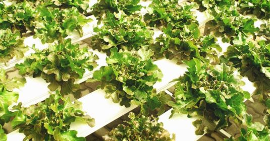 Hydroponic Systems 101 and Choosing the Perfect System for You