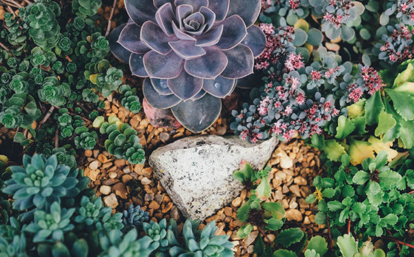 A photo of ground cover plants from above