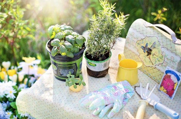 Supplies for planting herbs outdoors