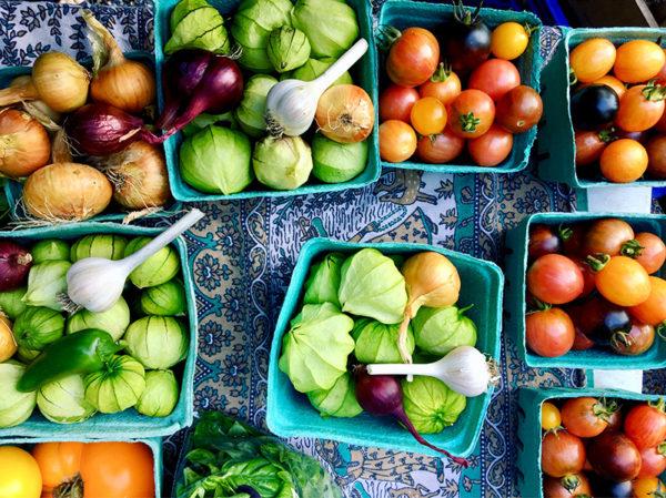 Salsa garden ingredients