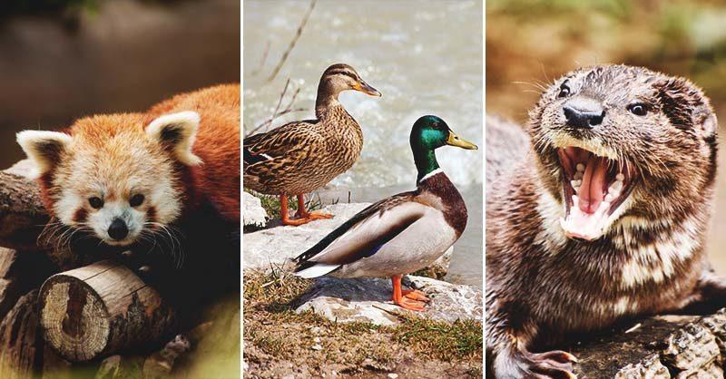 When Poultry Predators Attack: Investigation and 11 Prevention Tips
