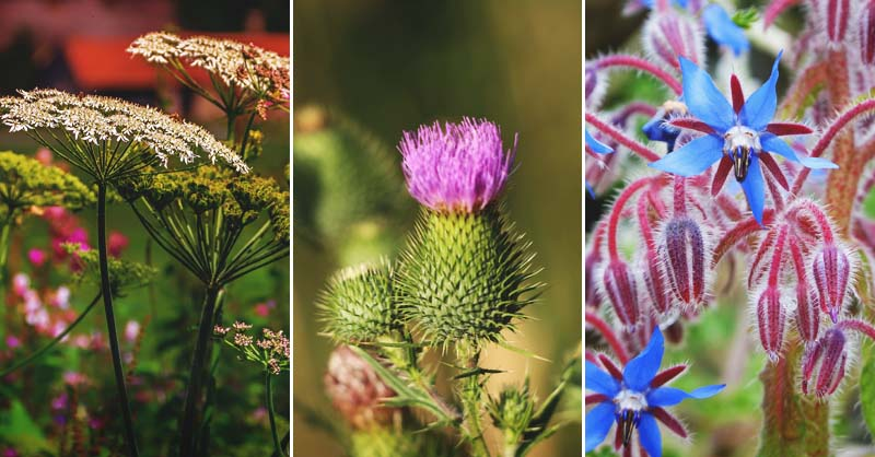 28 Edible Weeds You Can Find in Your Own Backyard