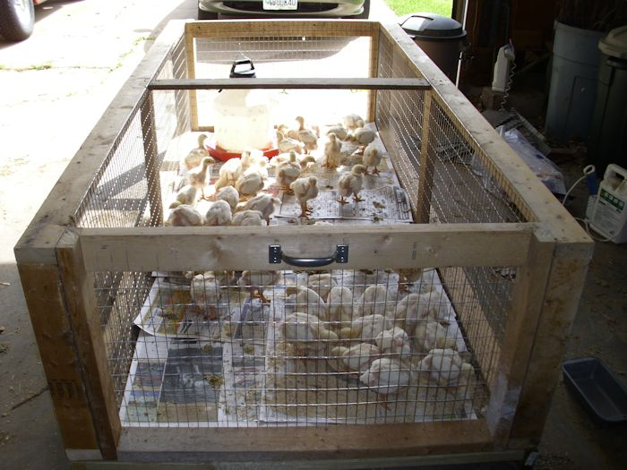 poultry brooder