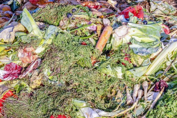 A pile of greens for a compost bin