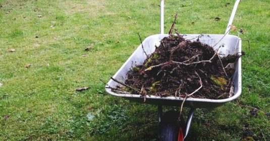 Composting 101: The Basics of Turning Scraps into Nutrients for Your Garden