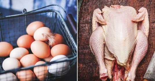 Eggs and Meat Productions: What You Need to Know as a Chicken Owner