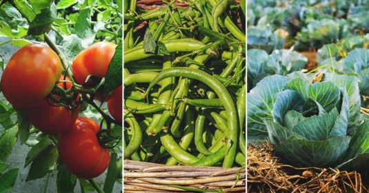 Plan the Perfect Canning Garden to Save Yourself Tons of Time and Money