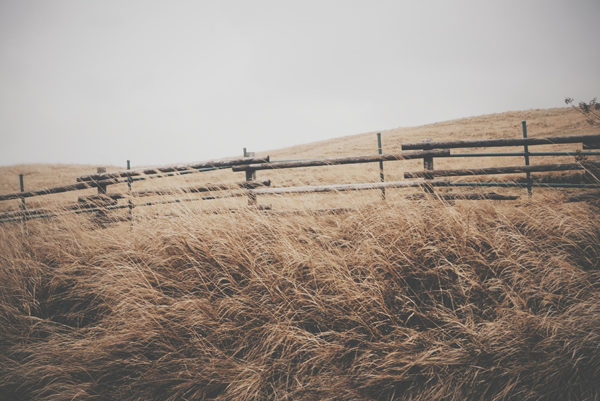 A fence in a field