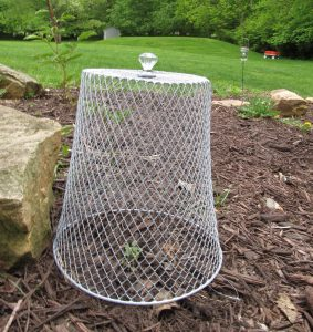 frugal garden cloche