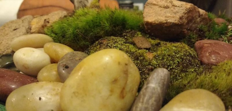 creating moss scapes