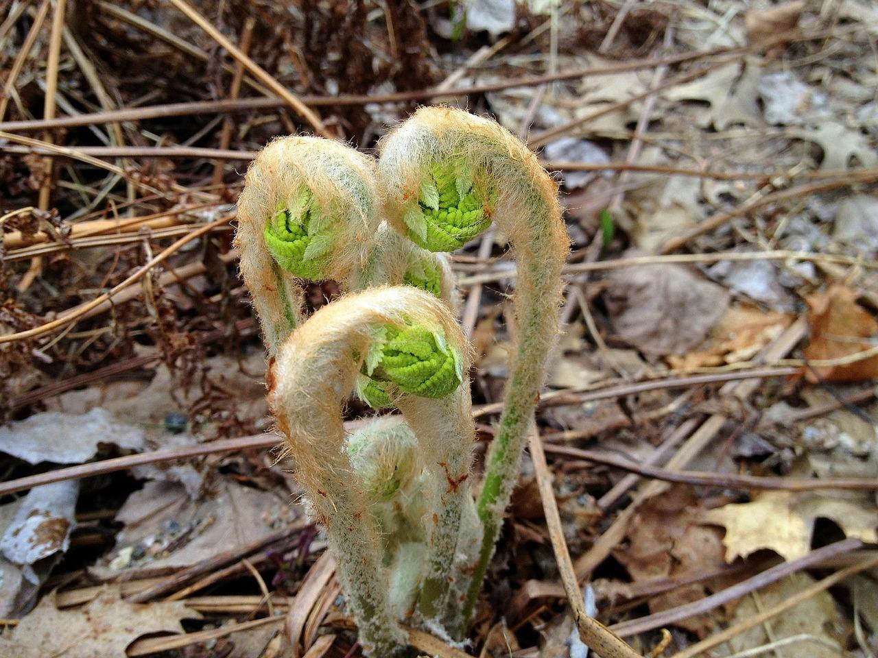 February Seedlings